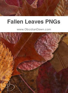Fallen Autumn Leaves PNGs