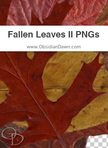 Fallen Autumn Leaves II PNGs