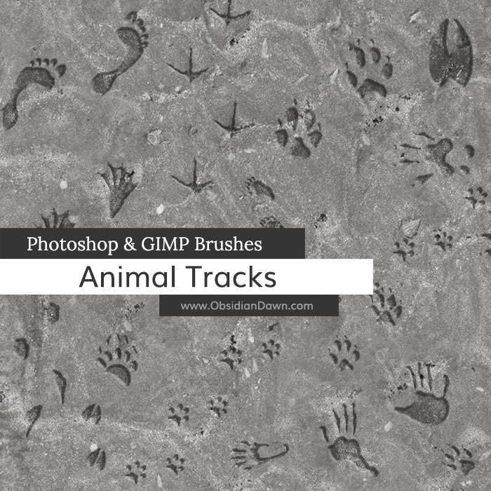 Animal Tracks Brushes