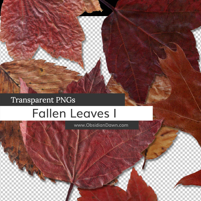 Fallen Autumn Leaves I PNGs