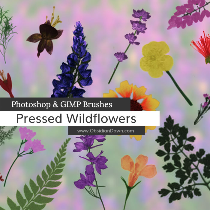 Pressed Wild Flowers Brushes