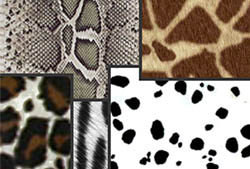 Animal Prints Patterns