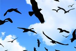 Birds (Flying) Brushes