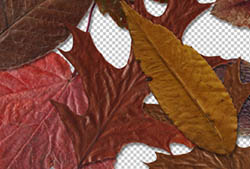 Fallen Leaves II PNGs