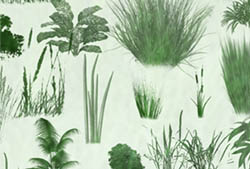 Grasses n Plants Brushes