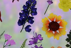 Pressed Wildflowers Brushes