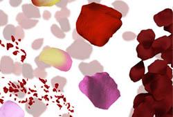Rose Petals Brushes
